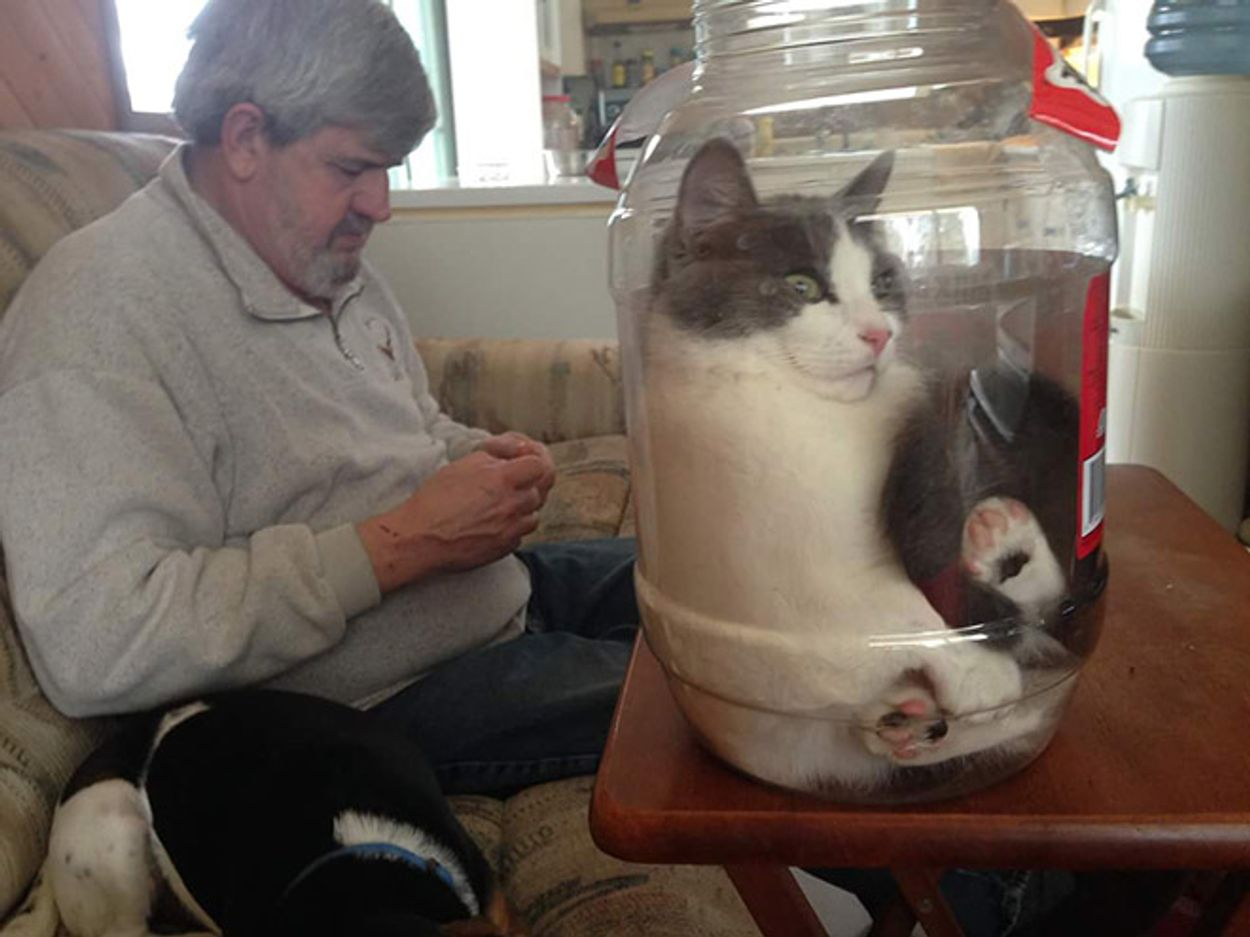 cats-in-bowls5