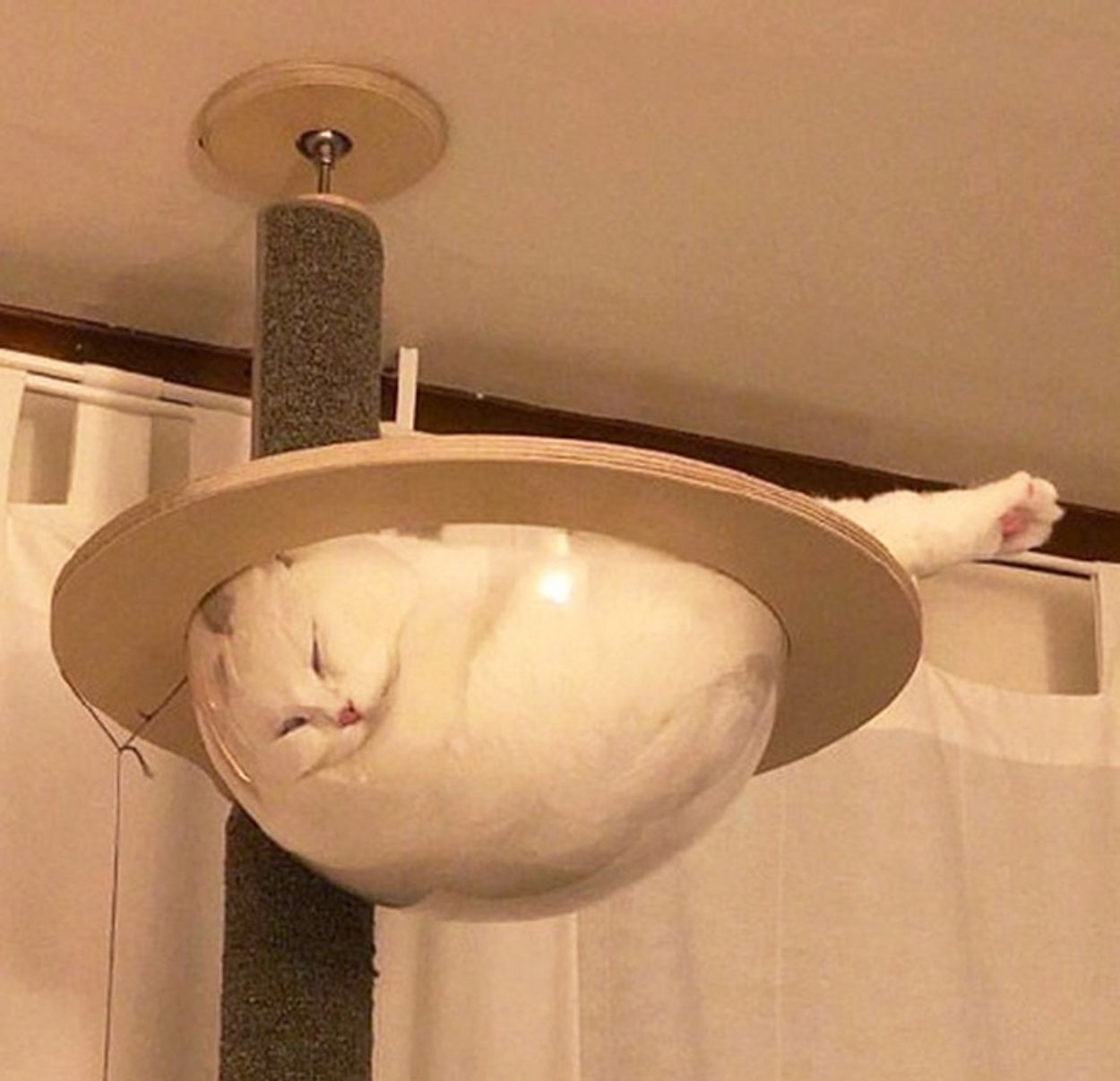 cats-in-bowls1
