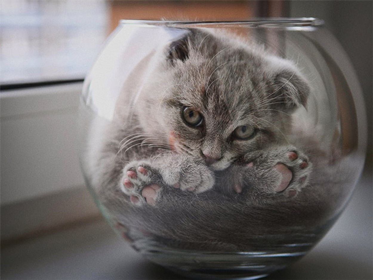 cats-in-bowls2