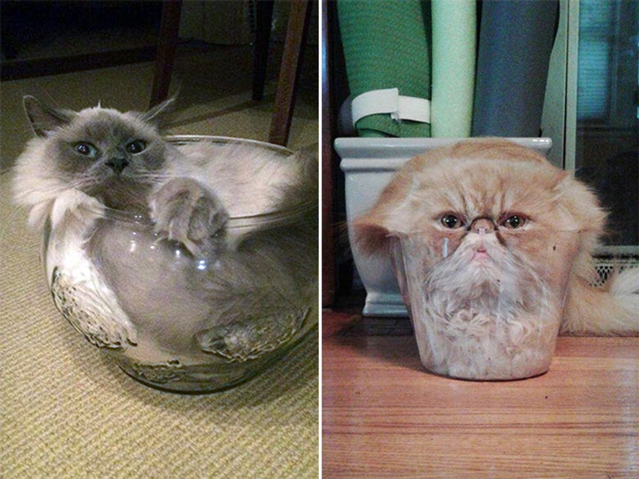 cats-in-bowls4