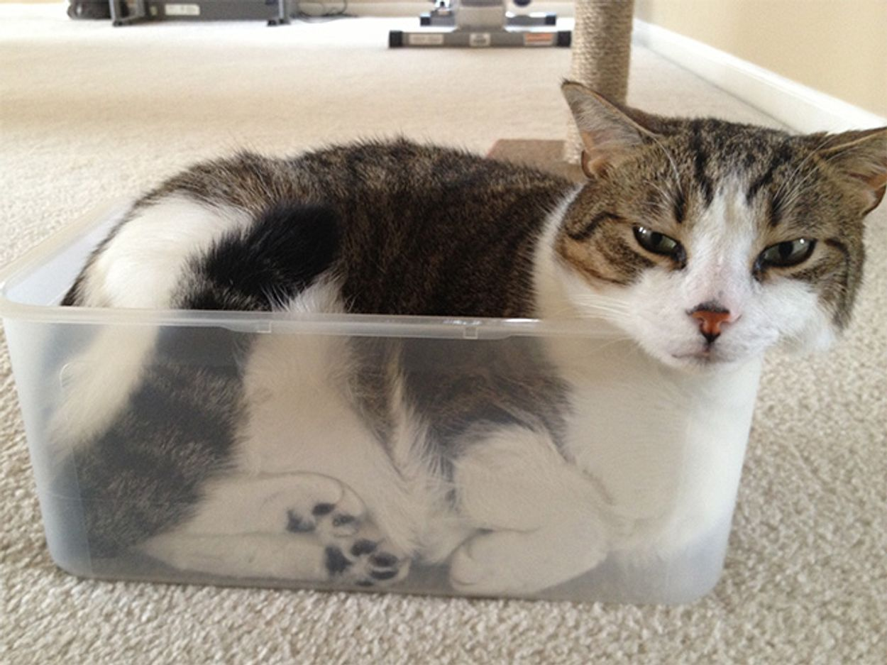 cats-in-bowls7