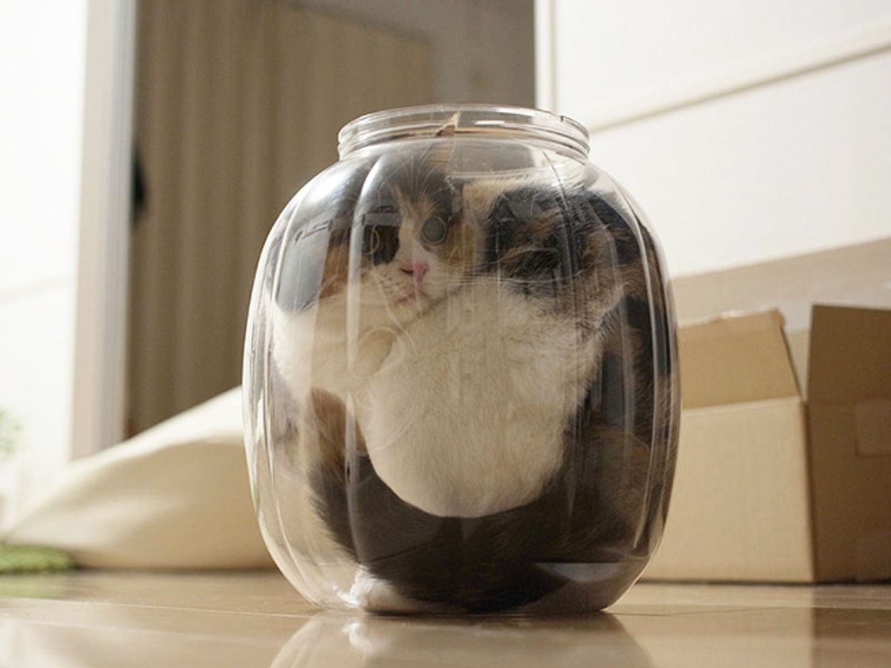 cats-in-bowls11