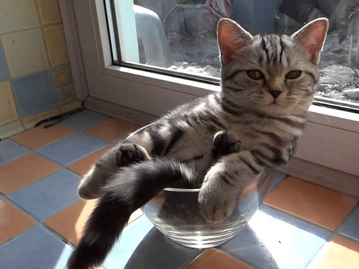 cats-in-bowls21
