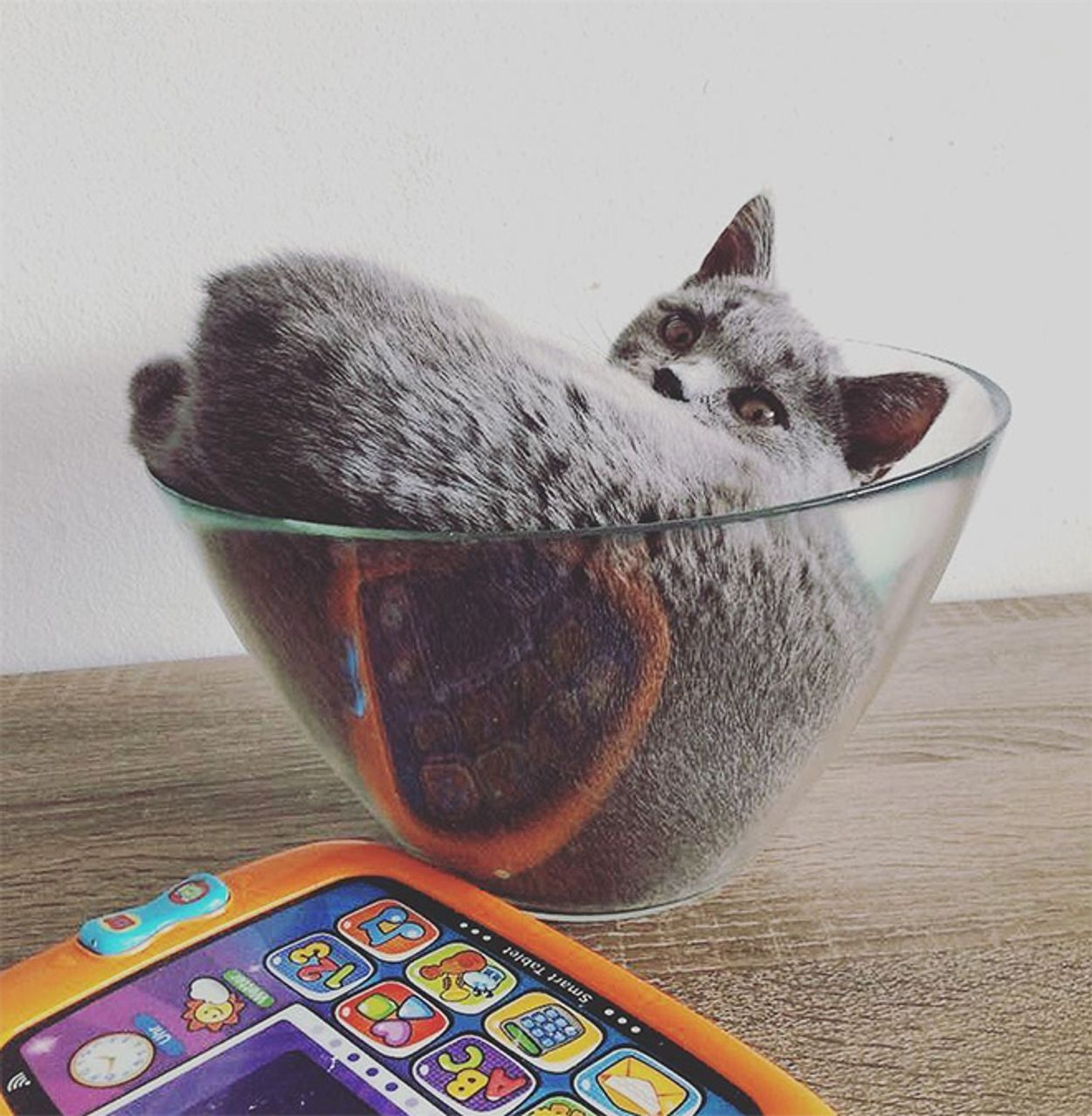 cats-in-bowls17
