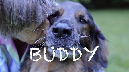 Afbeelding van IDFA-film Buddy