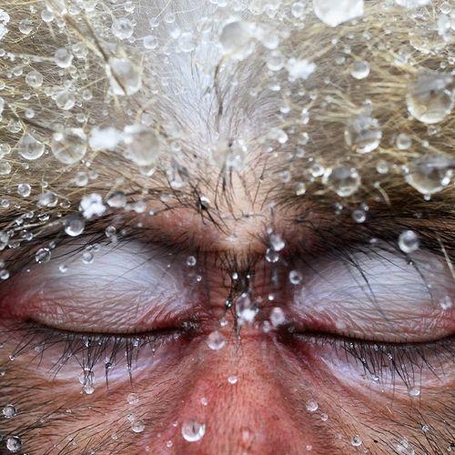 Afbeelding van Nederlander Jasper Doest wint Oscar onder de fotografie